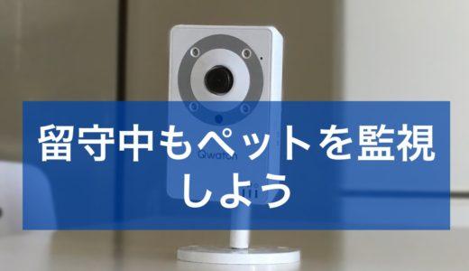 監視カメラの設定は簡単!留守中のペットを見てみよう