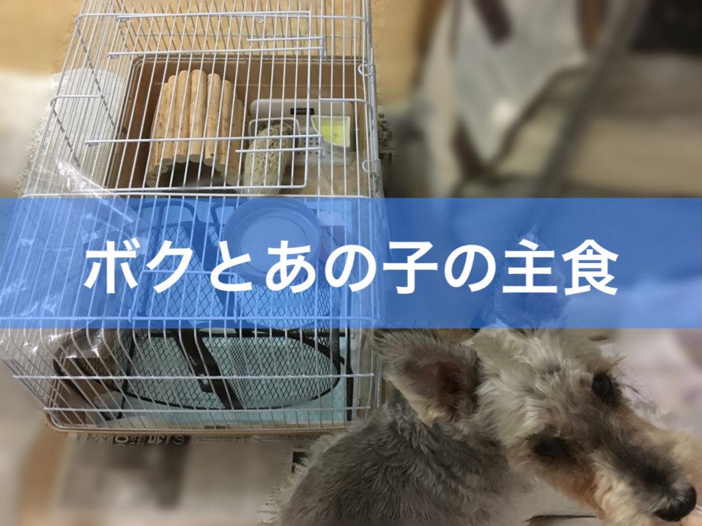 犬とハリネズミの主食