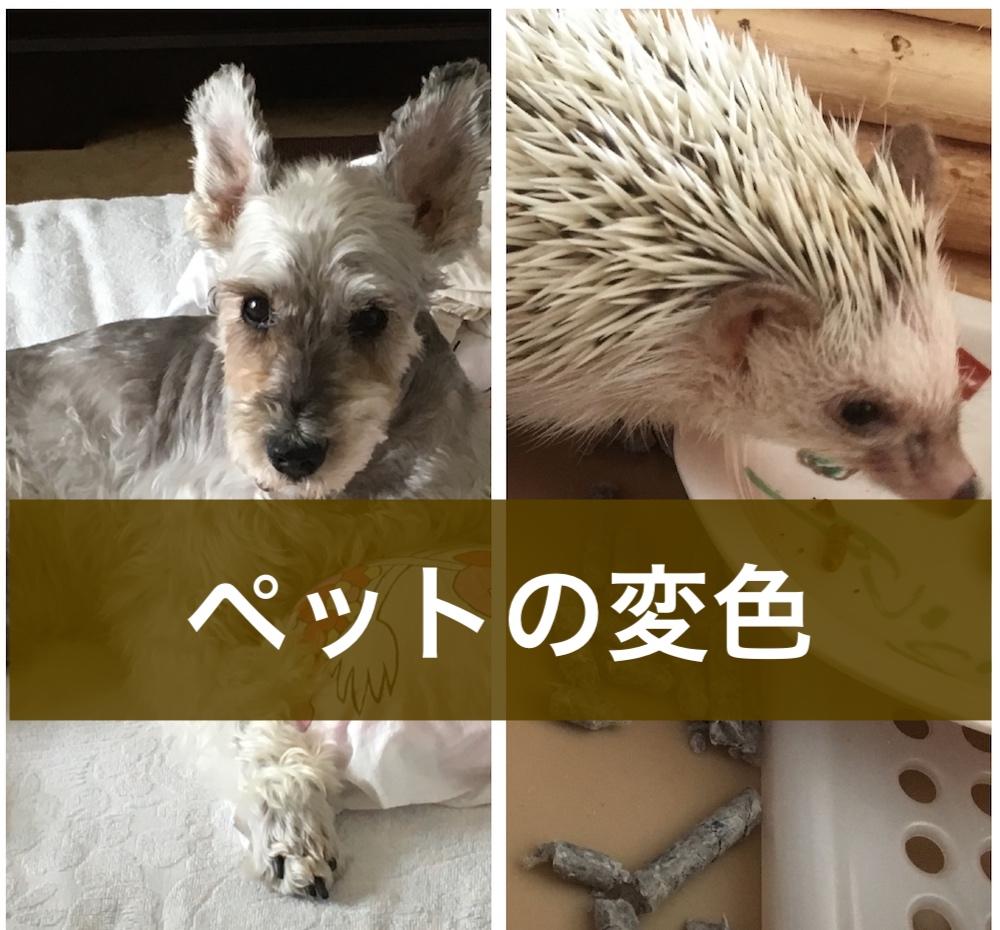 犬とハリネズミの変色