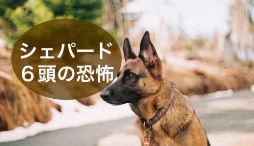 海外旅行中にシェパード犬6頭が放し飼い、危険を回避した方法