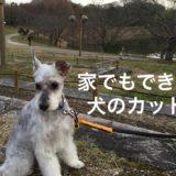 犬のトリミング