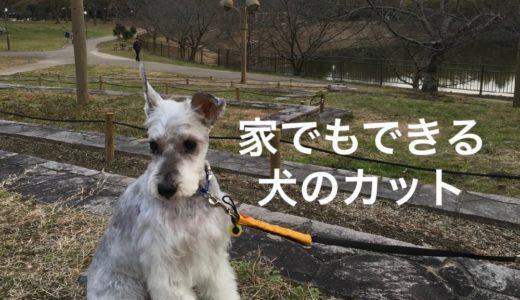 犬のトリミングが家でも簡単!耳の中まできれいにカット