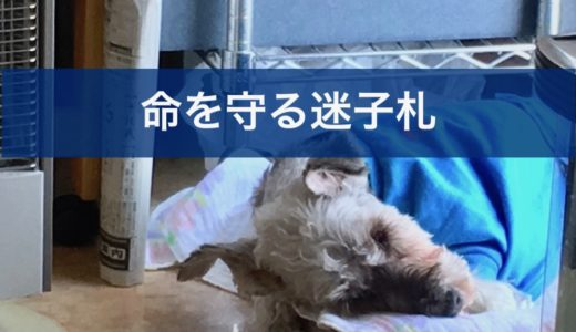 迷子札(ネームプレート)が飼い犬の命を守る理由