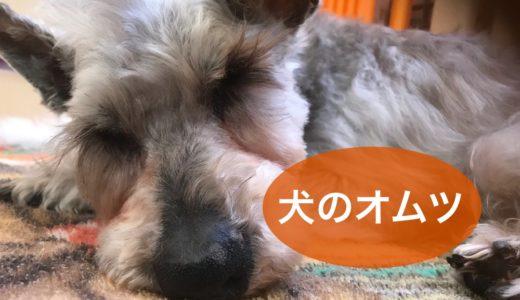 老犬のお世話(介護) 犬用オムツと赤ちゃん用オムツ