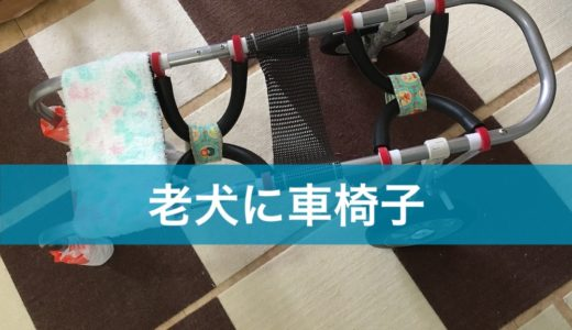 車椅子(歩行器)は、足が弱くなってきた老犬にお勧め
