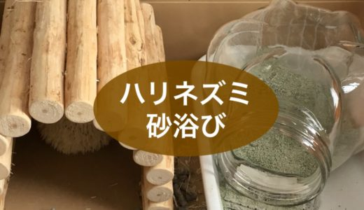 ハリネズミの砂浴び、容器や砂の選択と設定方法